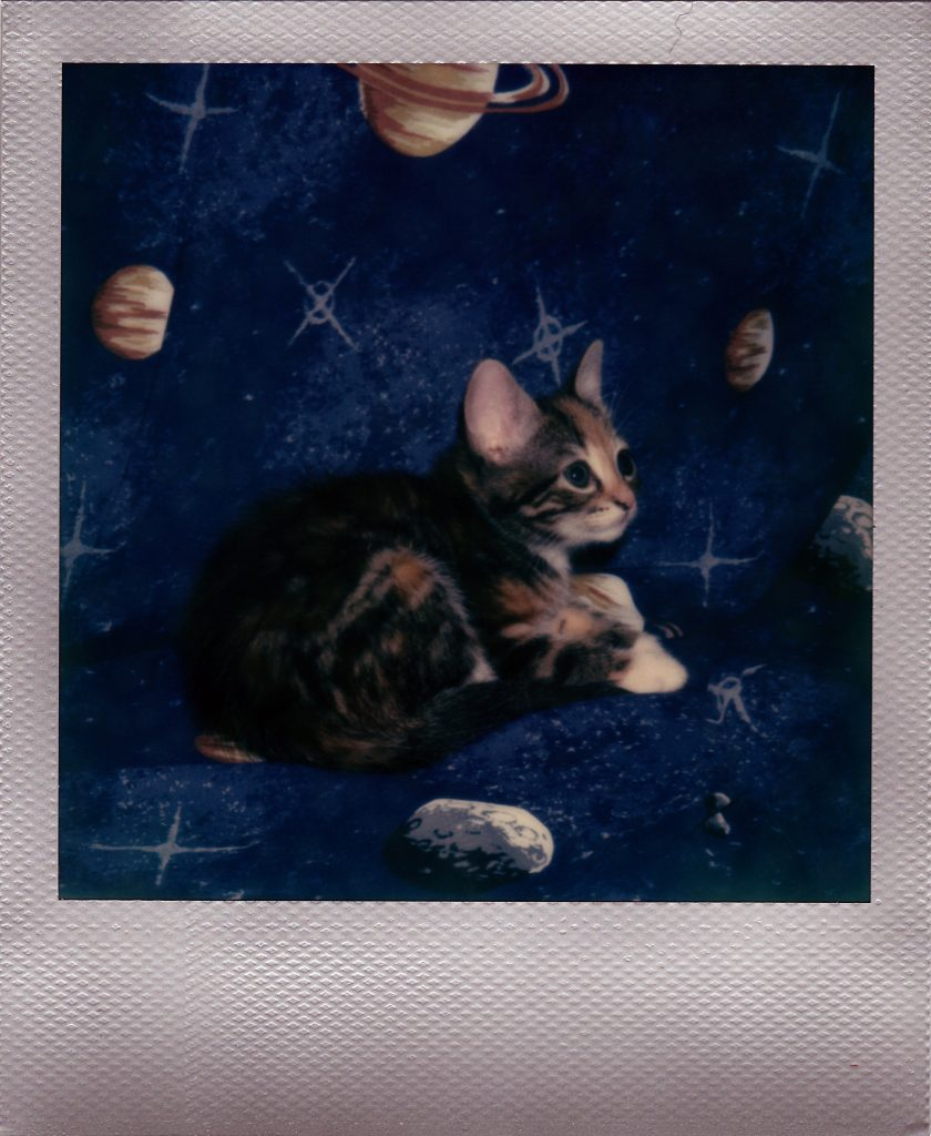 kittensinspace-1