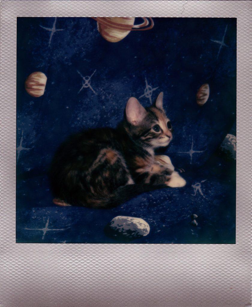 kittensinspace-1