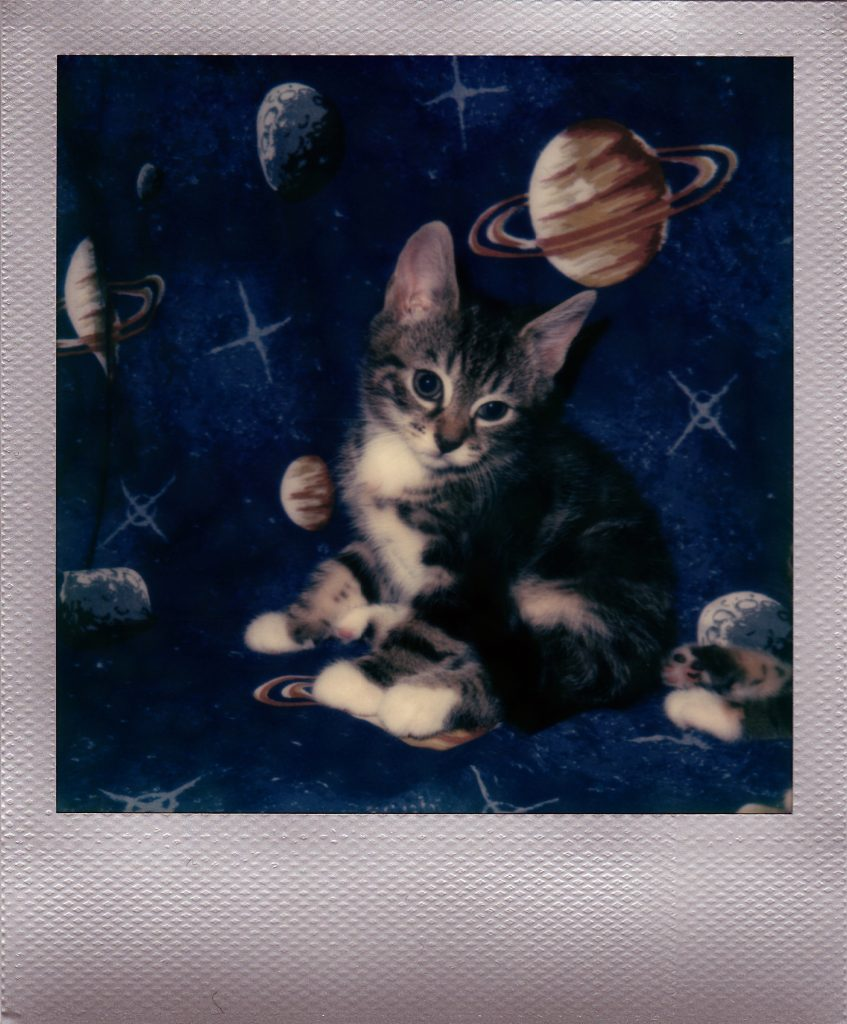 kittensinspace-2