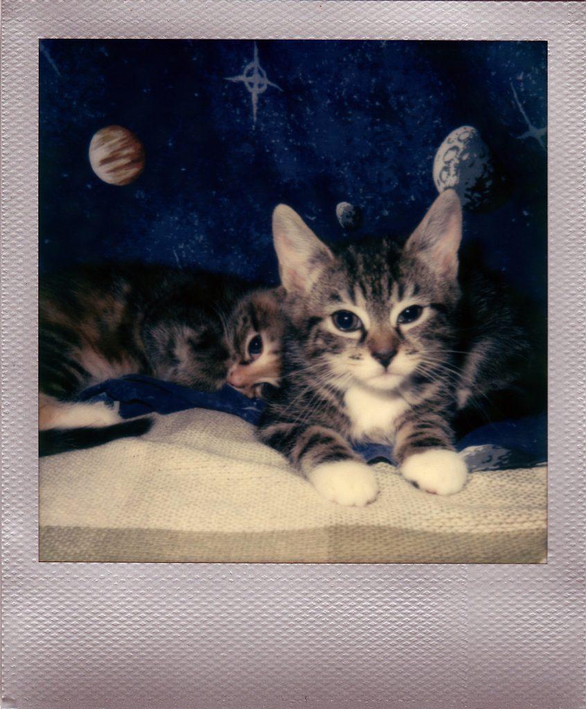 kittensinspace-3