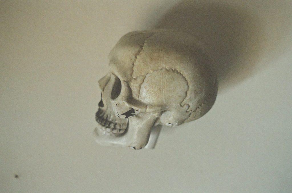 skull (4)